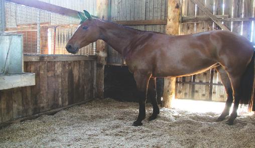 Equestrian Bedding